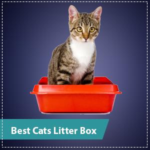 best cats litter box